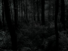 trees_dark_forest_woods_desktop_1600x1200_wallpaper-147750